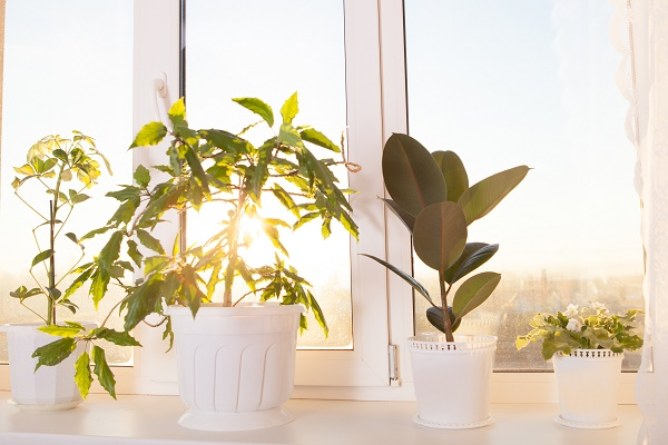 Plants need care during moving